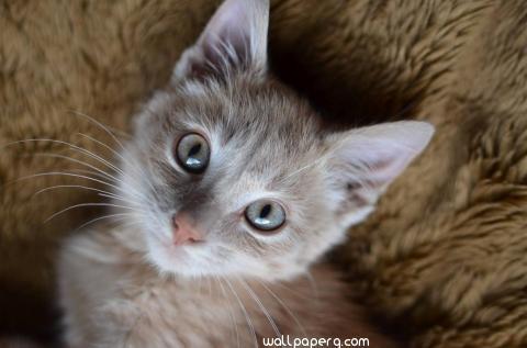 Dixon the kitten