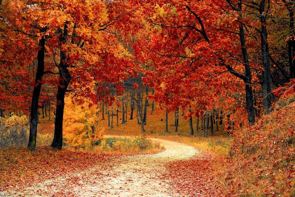 Autumn falling leaves hd wallpaper
