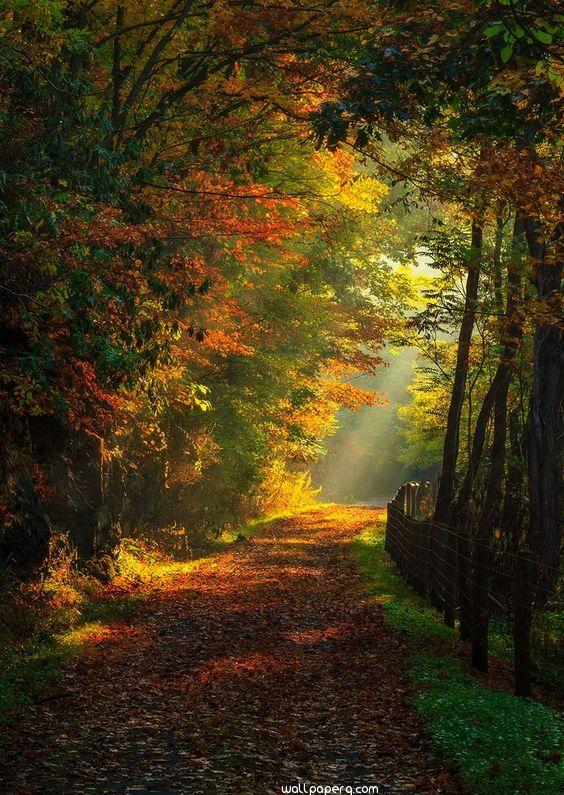 The autumn road hd image