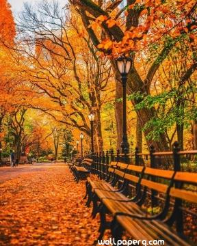 Autumn falling leaves hd image