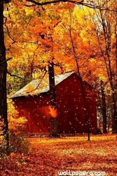 Autumn with house hd wall