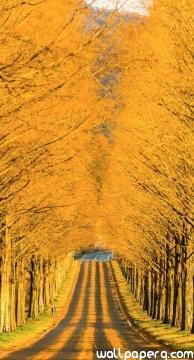 Long road in autumn