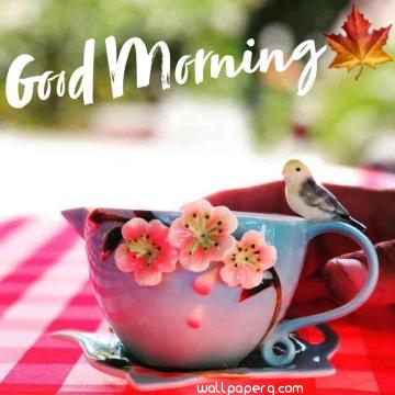 Good morning hd wallpaper whatsapp