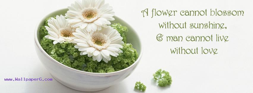 Flower cannot blossom fb cover