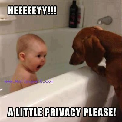 Little privacy ,wide,wallpapers,images,pictute,photos