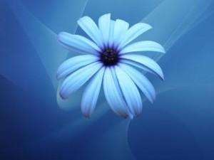 White blue flower