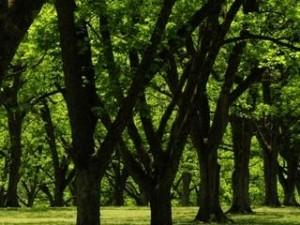 Green park ,wide,wallpapers,images,pictute,photos