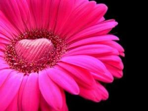 Flower love ,wide,wallpapers,images,pictute,photos