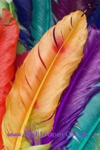 Colorful feathers ,wide,wallpapers,images,pictute,photos