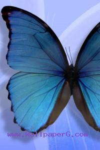 Silent butterfly ,wide,wallpapers,images,pictute,photos