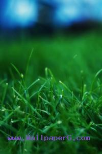 Wet green grass