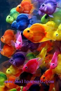 Colorful fishes ,wide,wallpapers,images,pictute,photos