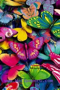 Colorful butterflies ,wide,wallpapers,images,pictute,photos