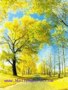 Yellow street ,wide,wallpapers,images,pictute,photos