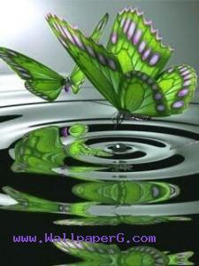 Green butterfly ,wide,wallpapers,images,pictute,photos