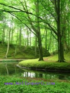 Elswout forest ,wide,wallpapers,images,pictute,photos