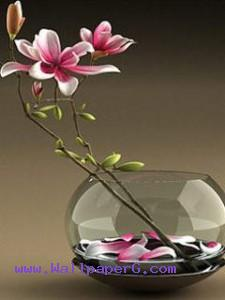 Pink flowers in a glass