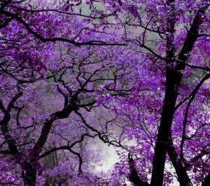 Purple autumn ,wide,wallpapers,images,pictute,photos