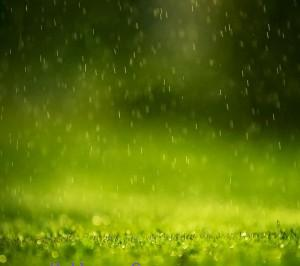 Green rain ,wide,wallpapers,images,pictute,photos