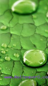 Green watery leaf