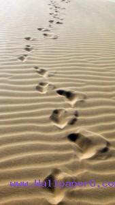Foot prints on soil ,wide,wallpapers,images,pictute,photos