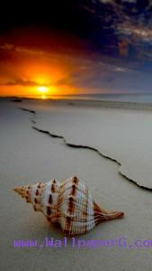 Sea shell ,wide,wallpapers,images,pictute,photos