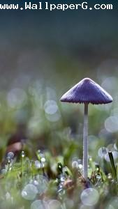 Mushroom 1 ,wide,wallpapers,images,pictute,photos