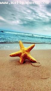 Star fish ,wide,wallpapers,images,pictute,photos
