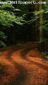 Way to forest 1 ,wide,wallpapers,images,pictute,photos
