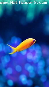 Fish in water 2 ,wide,wallpapers,images,pictute,photos