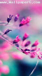 Pink purple flowres