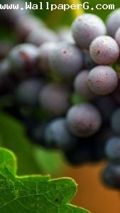 Grapes ,wide,wallpapers,images,pictute,photos