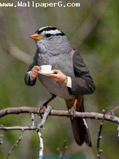 Sparrow drinking tea