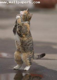 Cat want to pray