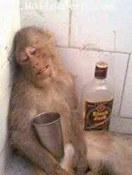 Monky drinking