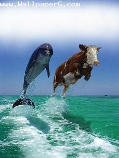 Race between shark and cow