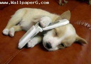 Puppy got a call