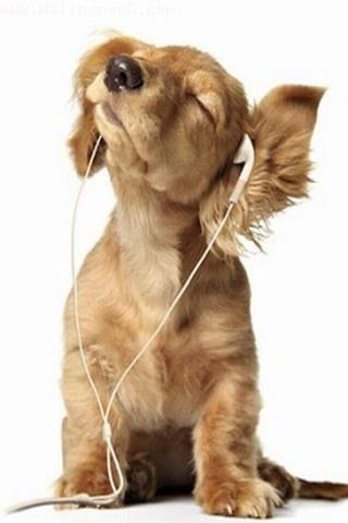 Dog listing music ,wide,wallpapers,images,pictute,photos