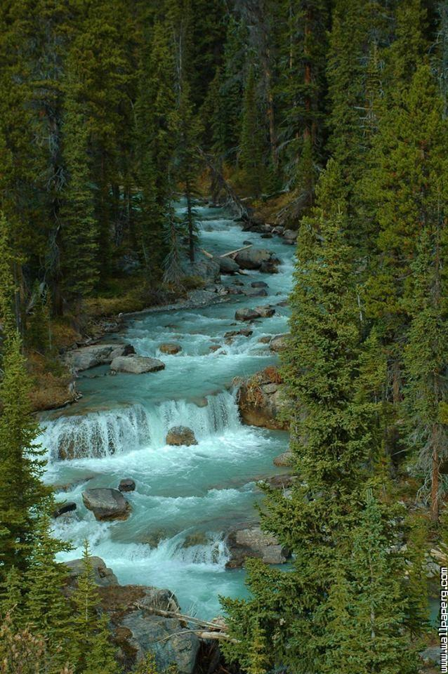 Jasper national park, alb