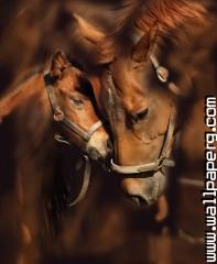 Beautiful horses ,wide,wallpapers,images,pictute,photos