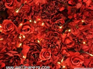 Red roses lights wallpaper