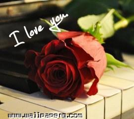 I love you(4)(3)