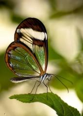 Glass butterfly ,wallpapers,images,