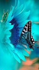 Blue butterfly 14 ,wide,wallpapers,images,pictute,photos