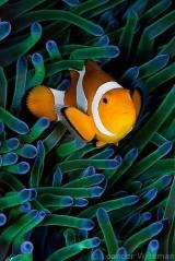 Cute orange fish