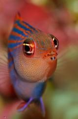 Attitude fish ,wide,wallpapers,images,pictute,photos