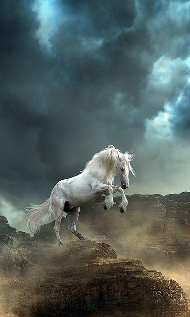 Beautiful white horse ,wallpapers,images,