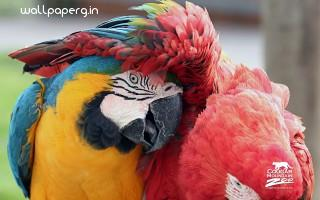 Best friends macaws