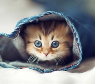 Cute kitten hd image