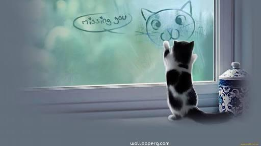 Fuuny miss you quote with cat ,wallpapers,images,